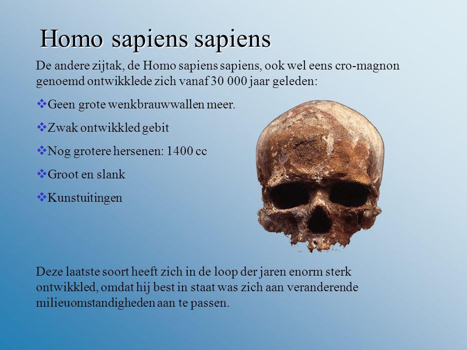 Homo sapiens sapiens De andere zijtak, de Homo sapiens sapiens, ook wel eens cro-magnon genoemd ontwikklede zich vanaf 30 000 jaar geleden:  Geen grote wenkbrauwwallen meer.
