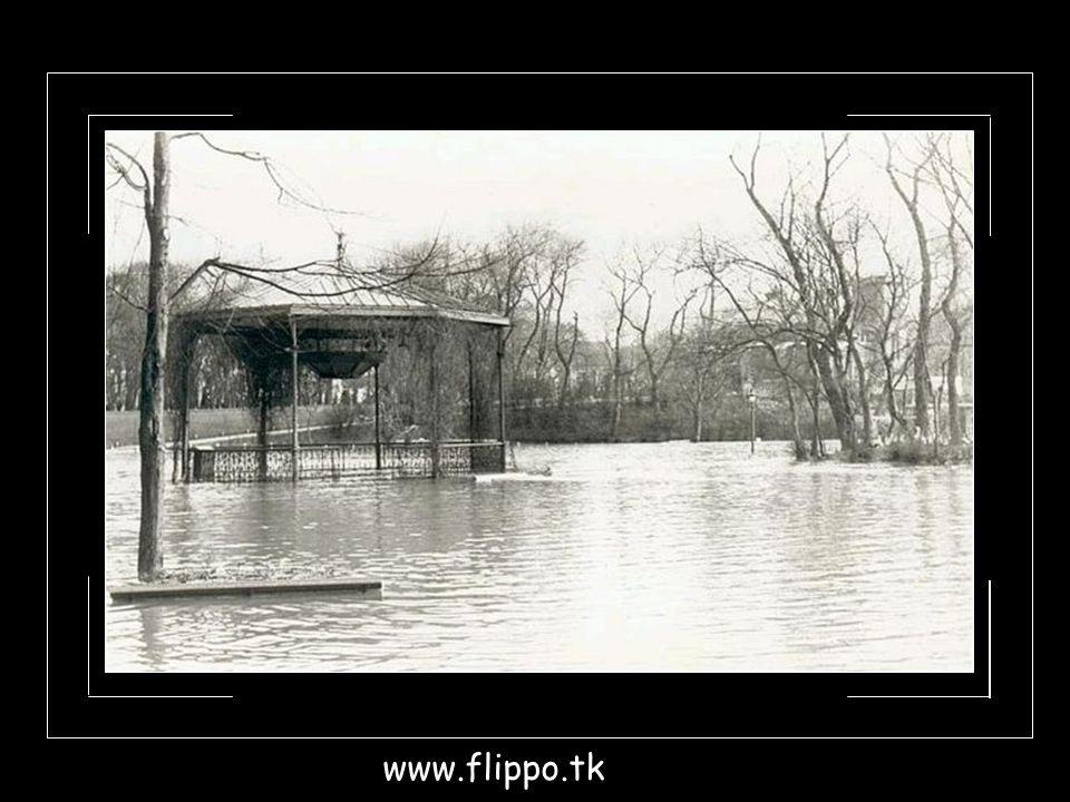 www.flippo.tk
