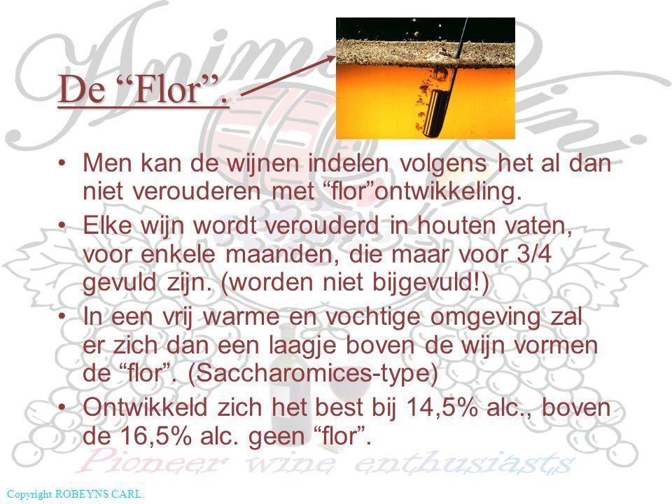 """Copyright ROBEYNS CARL. De """"Flor"""". Men kan de wijnen indelen volgens het al dan niet verouderen met """"flor""""ontwikkeling. Elke wijn wordt verouderd in h"""