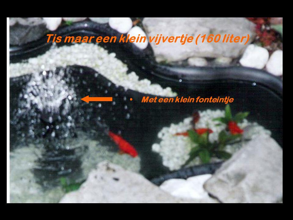 Tis maar een klein vijvertje (160 liter) Met een klein fonteintje