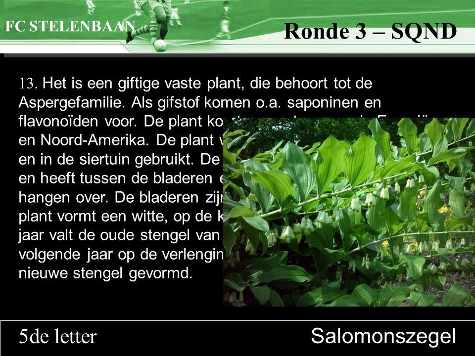 >>0 >>1 >> 2 >> 3 >> 4 >> Ronde 9 13. Het is een giftige vaste plant, die behoort tot de Aspergefamilie. Als gifstof komen o.a. saponinen en flavonoïd