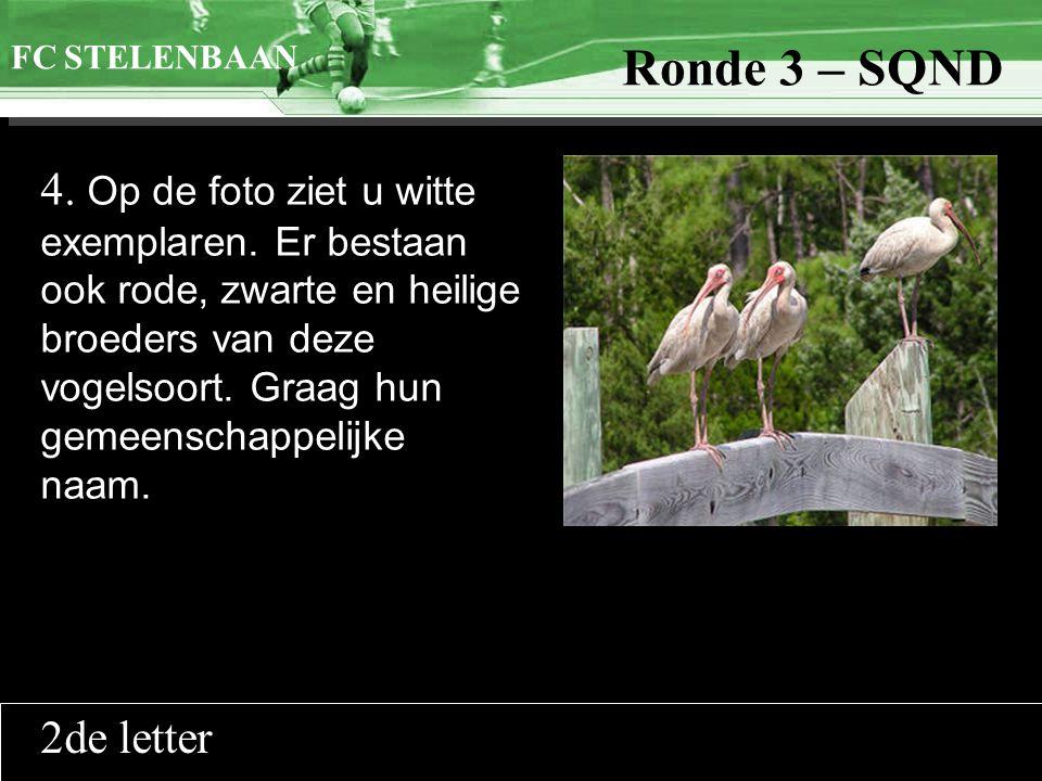 >>0 >>1 >> 2 >> 3 >> 4 >> Ronde 9 4. Op de foto ziet u witte exemplaren. Er bestaan ook rode, zwarte en heilige broeders van deze vogelsoort. Graag hu