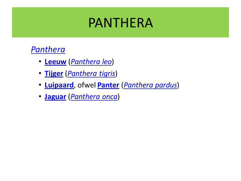 PANTHERA Panthera Leeuw (Panthera leo) LeeuwPanthera leo Tijger (Panthera tigris) TijgerPanthera tigris Luipaard, ofwel Panter (Panthera pardus) LuipaardPanterPanthera pardus Jaguar (Panthera onca) JaguarPanthera onca
