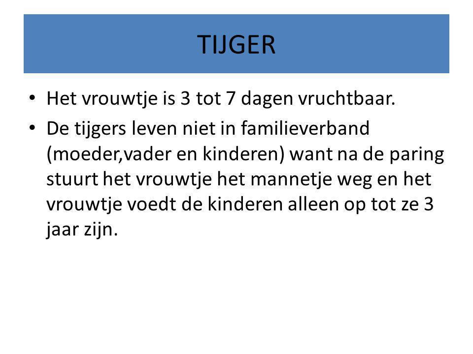 TIJGER Je hebt veel soorten TIJGERS Er bestaan 8 soorten tijgers 1 Noord- indische tijger 2 Chinese tijger 3 Amurtijger 4 Sumatraanse tijger 5 Bengaalse tijger 6 Witte tijger 7 De Siberische tijger 8 De Koningstijger