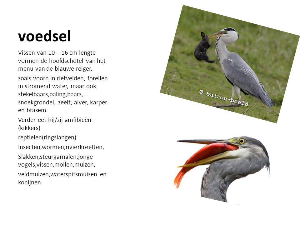 Het lichaam Het lichaam bestaat uit verschillende onderdelen: 1.Hals 2.poten 3. vleugels 4. snavel