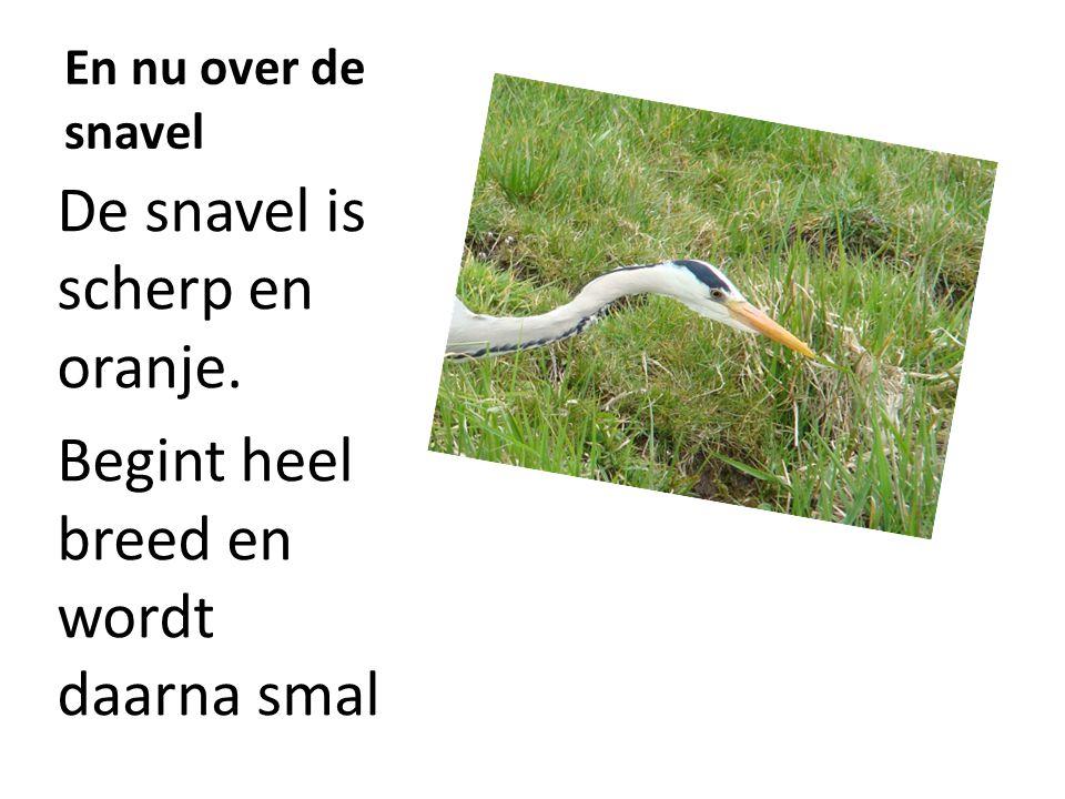 kenmerken De blauwe reiger is te herkennen aan: Een grootte van 90 cm En een gewicht van zo'n 2 kg Aan het geluid kun je de vogel herkennen Een diep, rauw schraatsj in de vlucht (ook wel beschreven als grrèngk ).