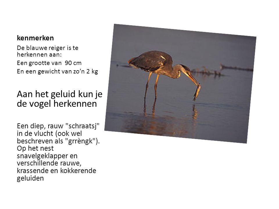 kenmerken De blauwe reiger is te herkennen aan: Een grootte van 90 cm En een gewicht van zo'n 2 kg Aan het geluid kun je de vogel herkennen Een diep,