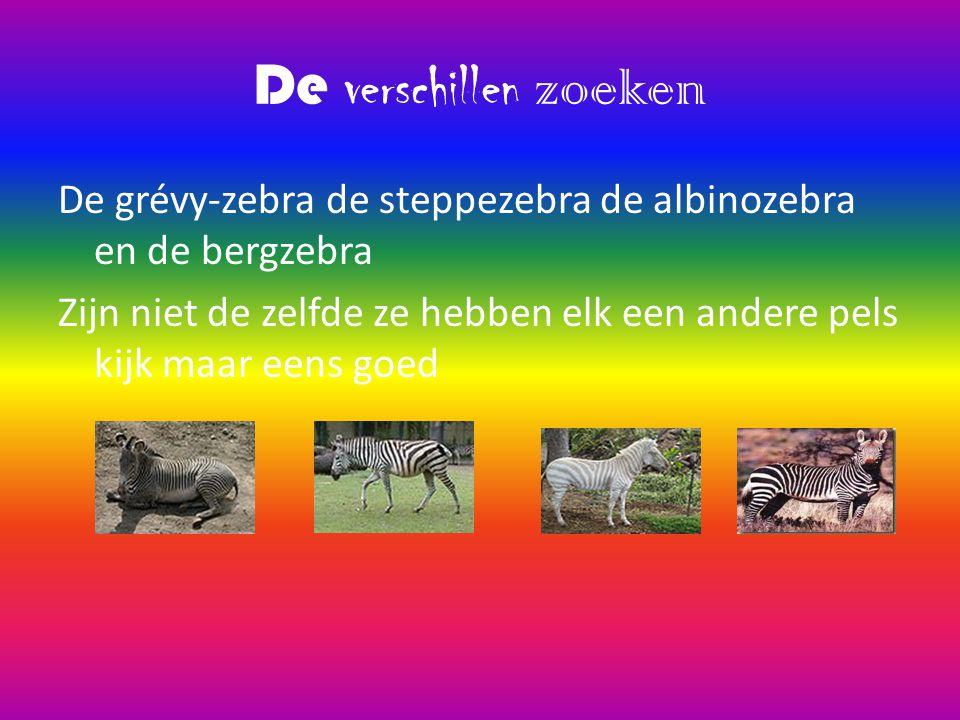 Soorten zebra's Er bestaan 4 soorten zebra' s 1 de steppezebra 2 is de grévy-zebra 3 is de albinozebra En de bergzebra en daar ga ik mijn natuurronde