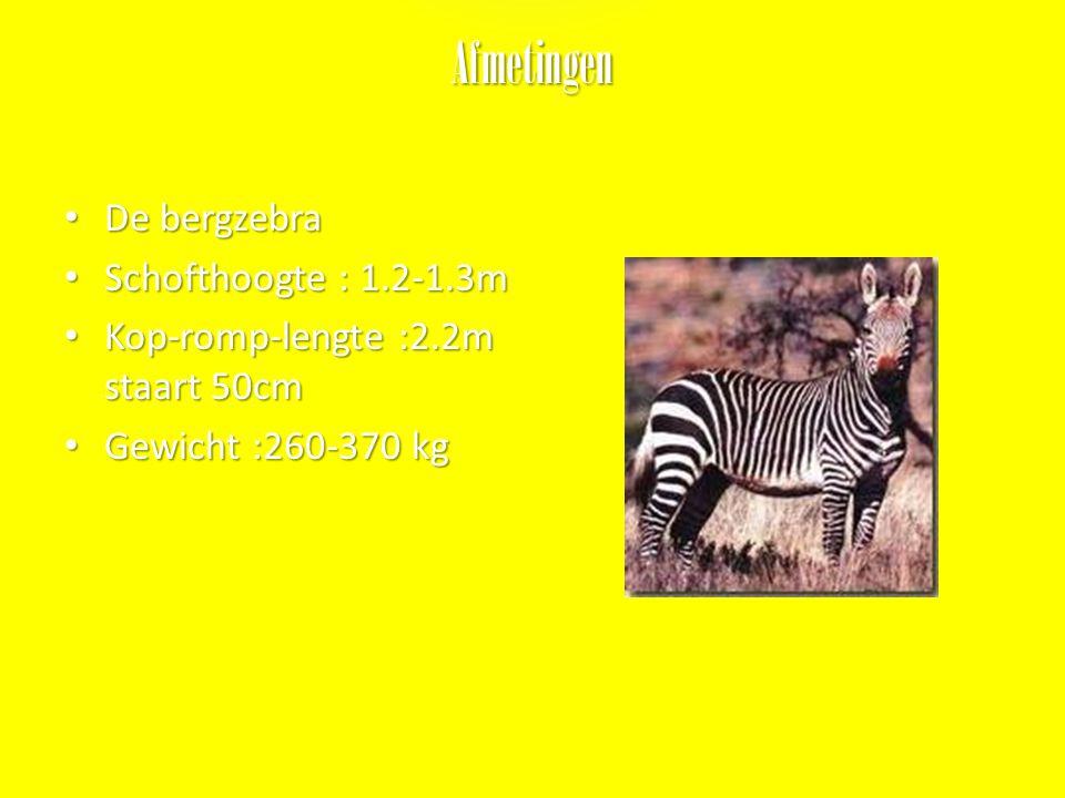 Voorplanting De berg zebra' s Zijn geslachtsrijp als ze 2jaar zijn. Paartijd de bergzebra's paren voornamelijk in oktober-maart Draagtijd 5-12 maanden