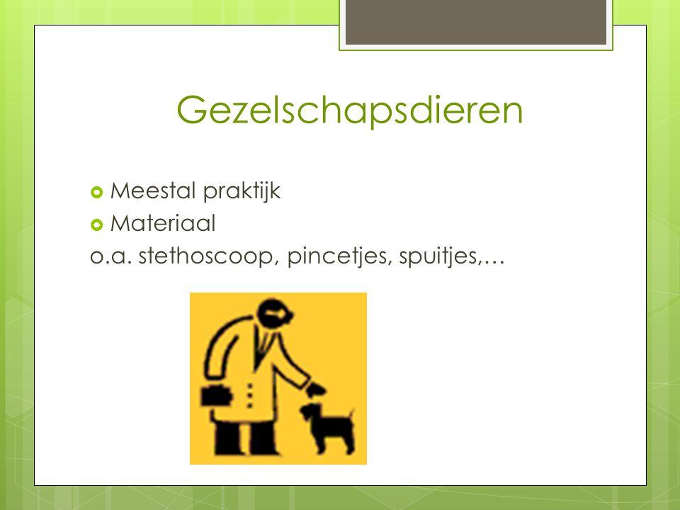 Gezelschapsdieren  Meestal praktijk  Materiaal o.a. stethoscoop, pincetjes, spuitjes,…