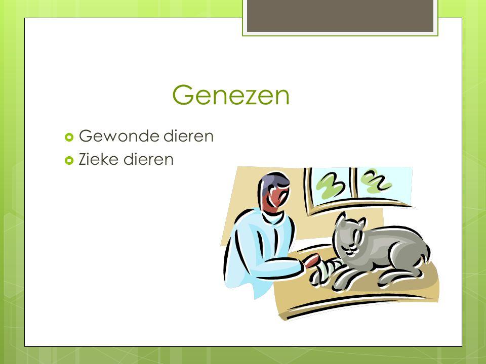 Genezen  Gewonde dieren  Zieke dieren