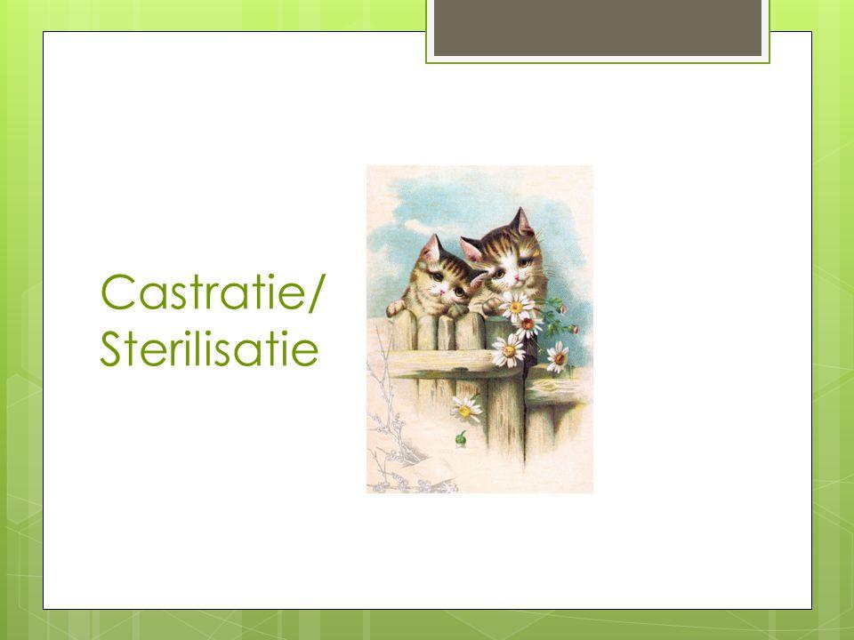 Castratie/ Sterilisatie