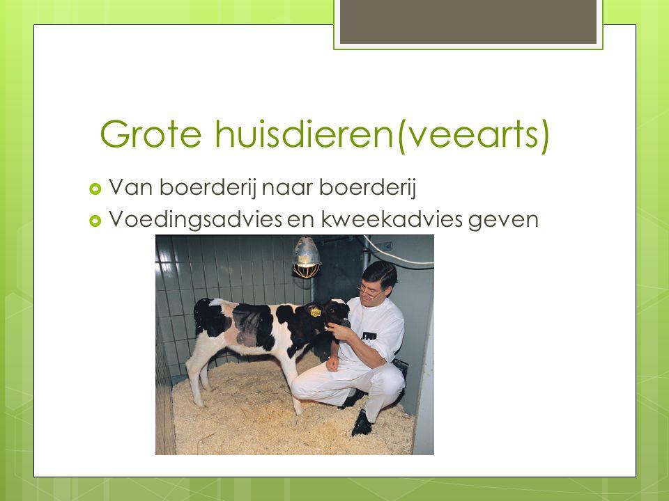 Grote huisdieren(veearts)  Van boerderij naar boerderij  Voedingsadvies en kweekadvies geven