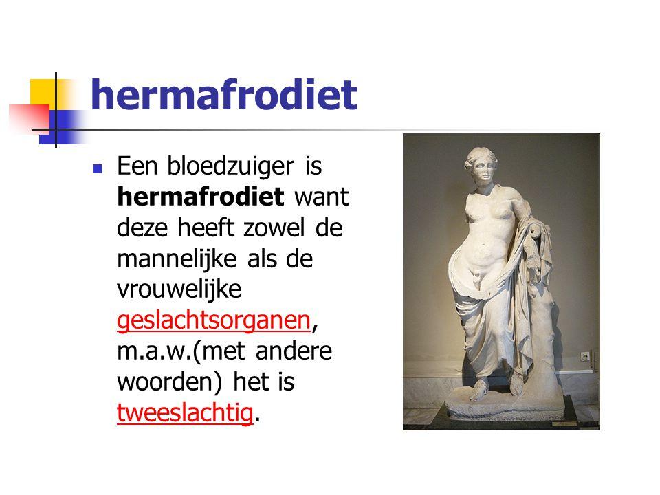 hermafrodiet Een bloedzuiger is hermafrodiet want deze heeft zowel de mannelijke als de vrouwelijke geslachtsorganen, m.a.w.(met andere woorden) het i