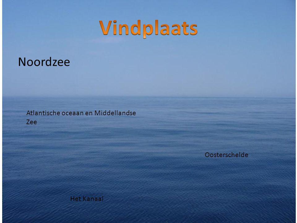 Noordzee Atlantische oceaan en Middellandse Zee Het Kanaal Oosterschelde