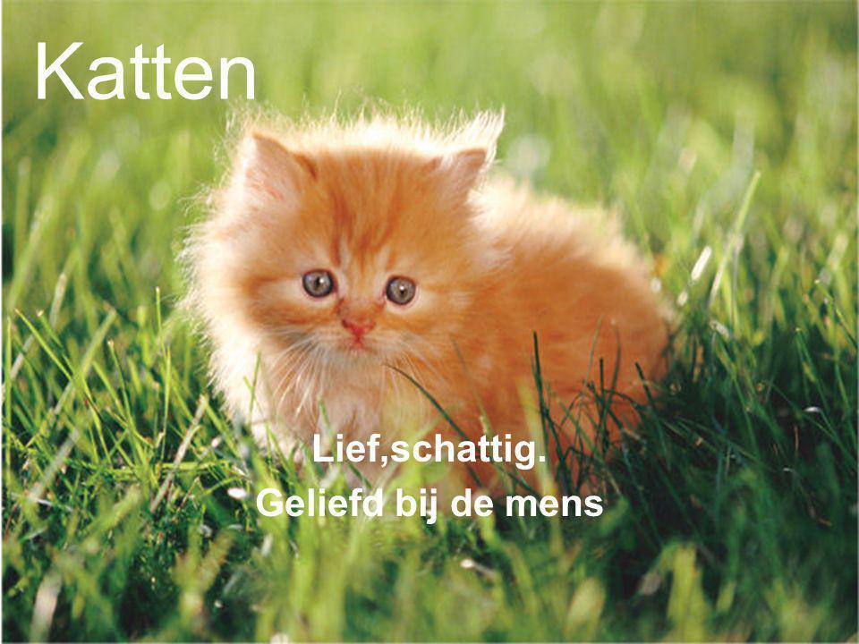 Katten Lief,schattig. Geliefd bij de mens