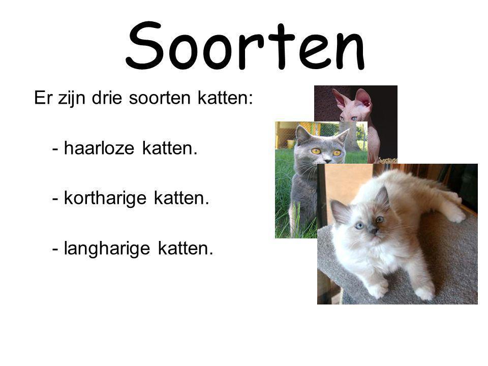 Soorten Er zijn drie soorten katten: - haarloze katten. - kortharige katten. - langharige katten.