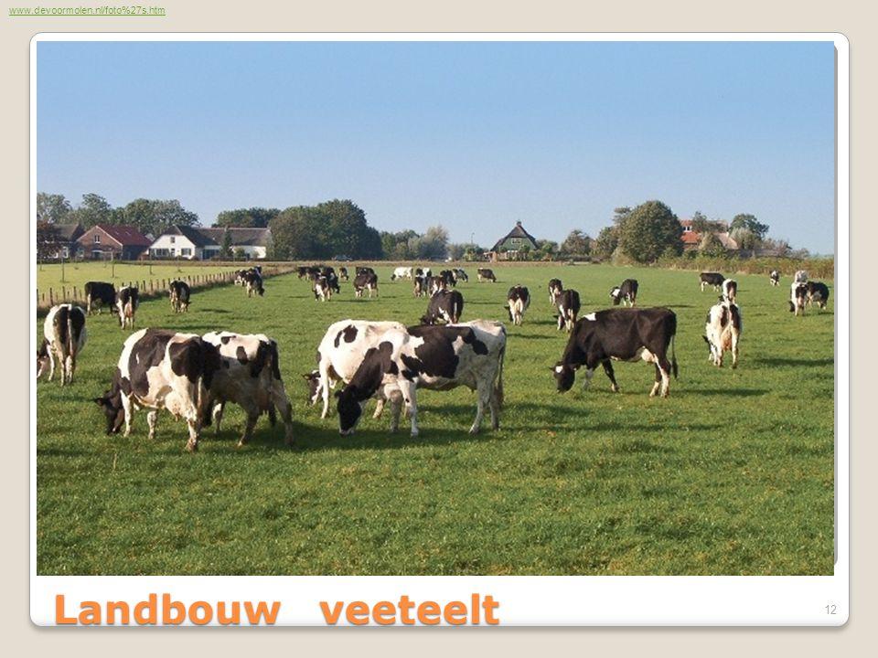 Landbouw veeteelt www.devoormolen.nl/foto%27s.htm 12
