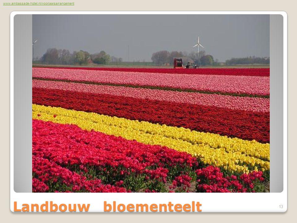 Landbouw bloementeelt www.ambassade-hotel.nl/voorjaarsarrangement 13