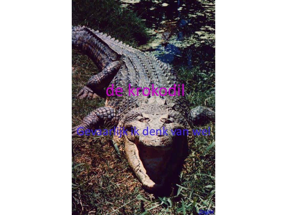 Voedsel van de krokodil jij misschien??? Krokodillen eten vooral vis maar zebra lusten ze ook wel