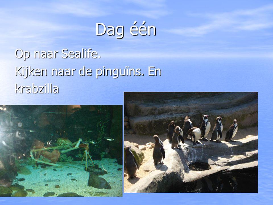 Dag één Dag één Op naar Sealife. Kijken naar de pinguïns. En krabzilla