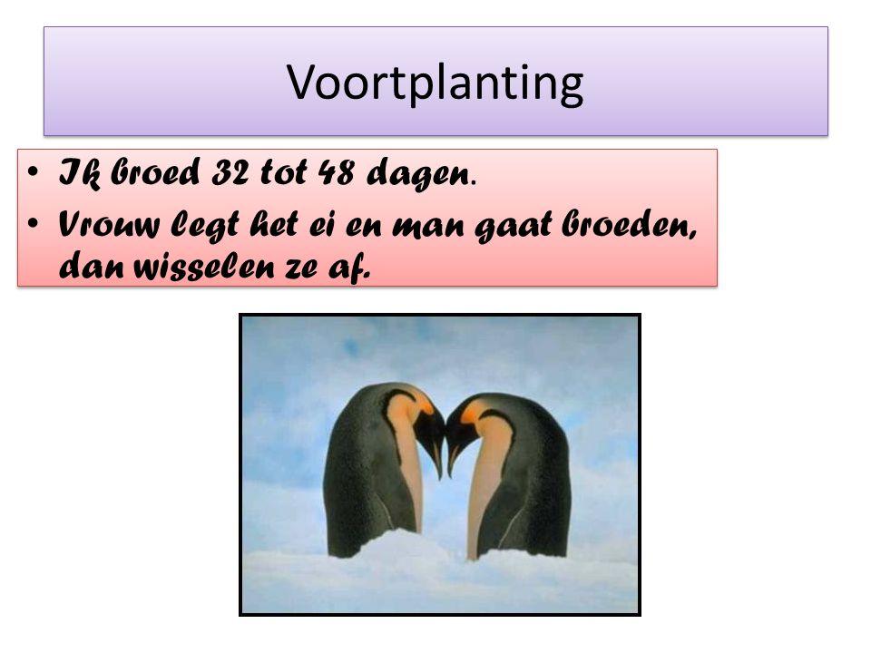 Voortplanting Ik broed 32 tot 48 dagen. Vrouw legt het ei en man gaat broeden, dan wisselen ze af.