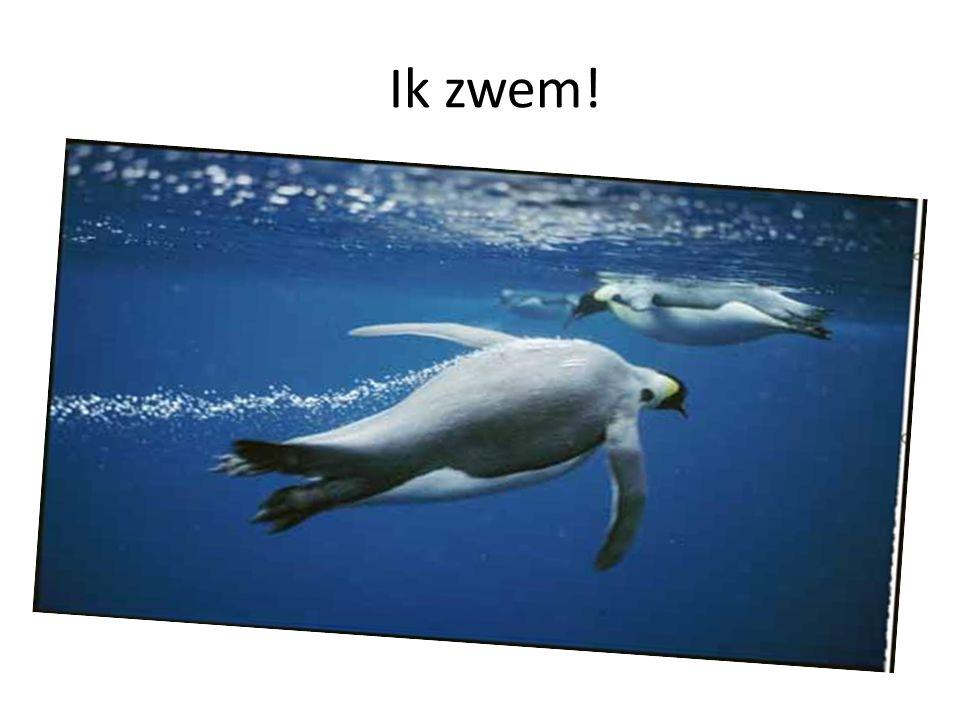Ik zwem!