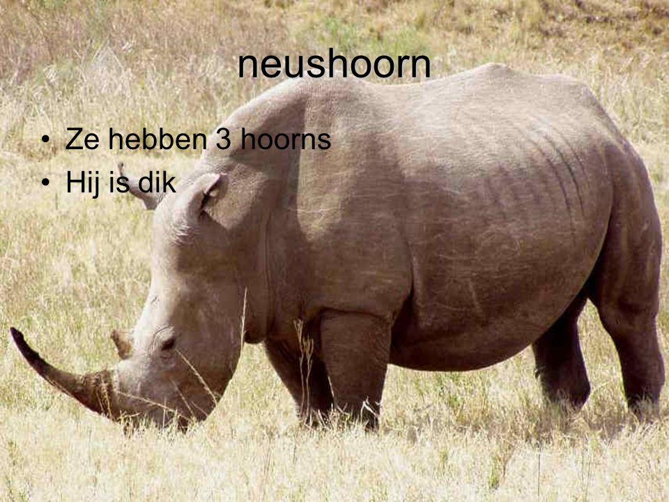 neushoorn Ze hebben 3 hoorns Hij is dik
