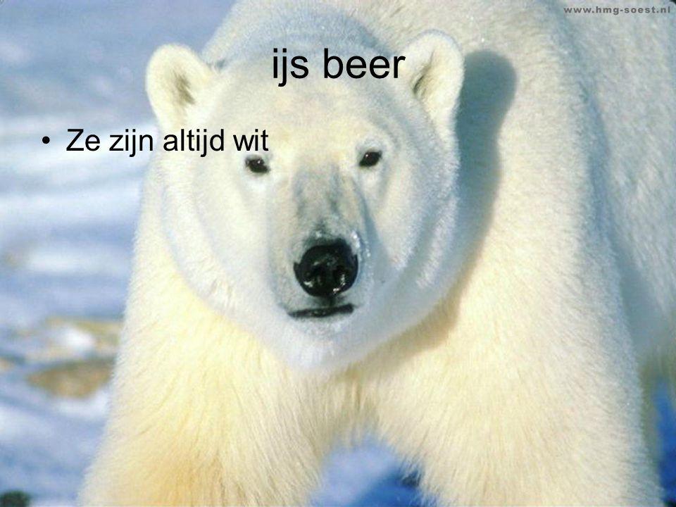 ijs beer Ze zijn altijd wit