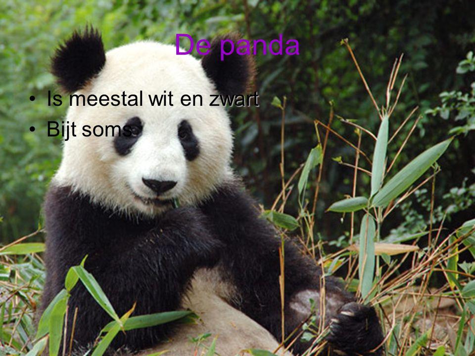 De panda zwartIs meestal wit en zwart Bijt soms