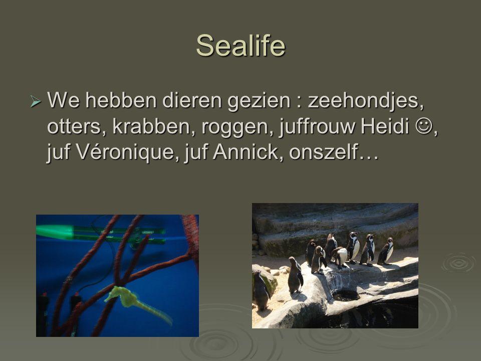 Sealife WWWWe hebben dieren gezien : zeehondjes, otters, krabben, roggen, juffrouw Heidi, juf Véronique, juf Annick, onszelf…