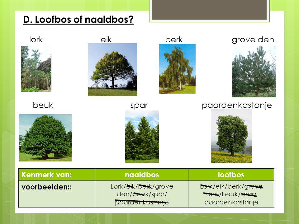 D. Loofbos of naaldbos? lork eik berkgrove den beuk sparpaardenkastanje Kenmerk van:naaldbosloofbos voorbeelden:: Lork/eik/berk/grove den/beuk/spar/ p