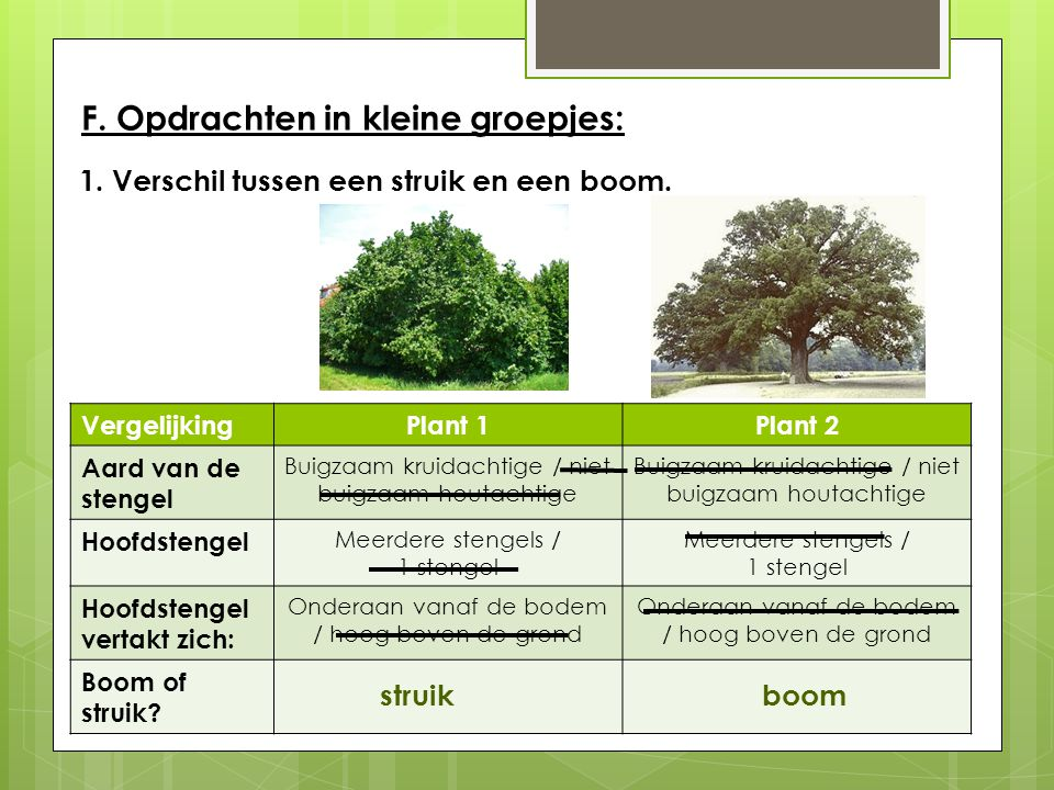 F. Opdrachten in kleine groepjes: 1. Verschil tussen een struik en een boom. VergelijkingPlant 1Plant 2 Aard van de stengel Buigzaam kruidachtige / ni