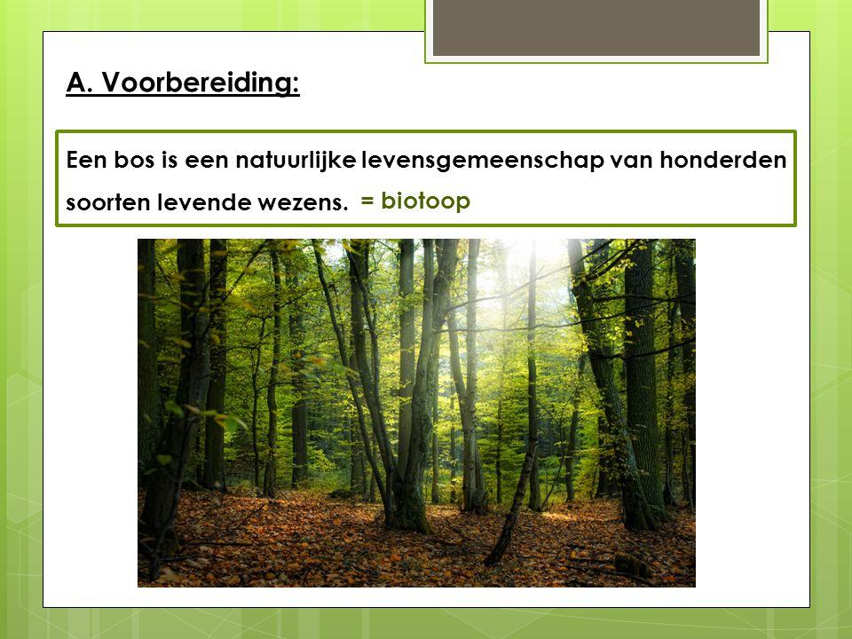 A. Voorbereiding: Een bos is een natuurlijke levensgemeenschap van honderden soorten levende wezens. In een bos overheersen bomen. Maar er is meer. We