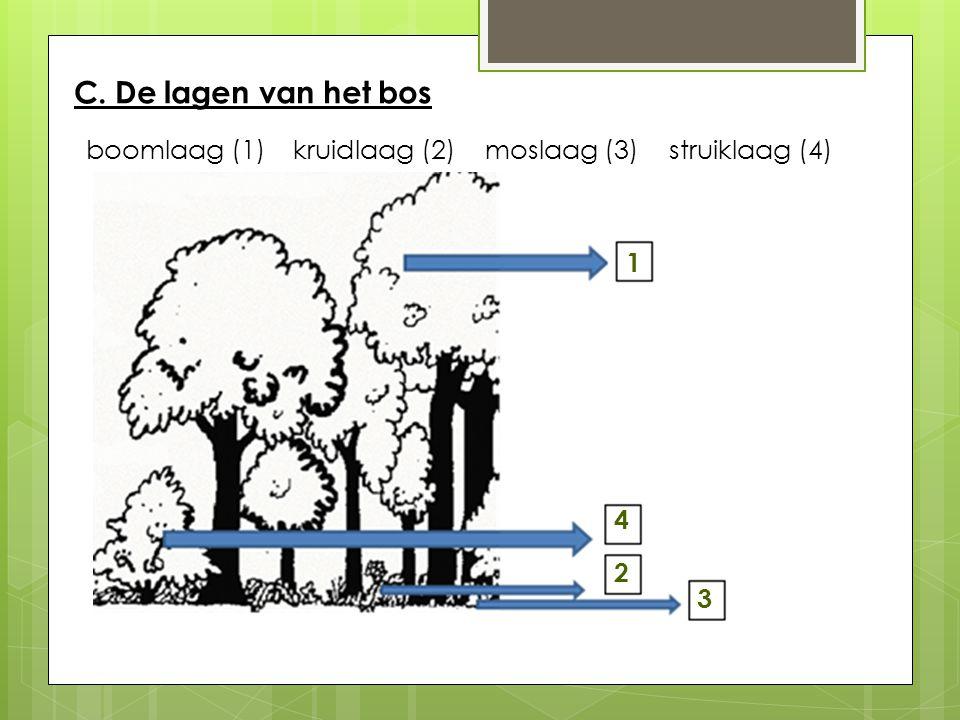 C. De lagen van het bos hazelaar beuk mossen bosanemoonhulst zwammen Inlandse eiksneeuwklokje