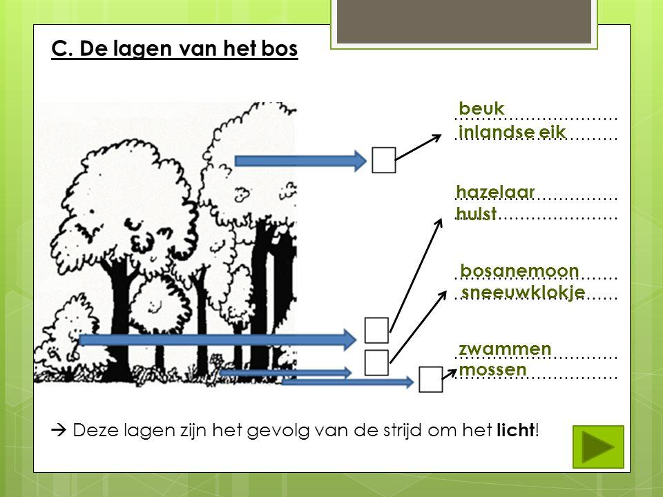 Opdracht 2 Determineer de organismen.Zoek de naam van dit kruidachtig plantje.