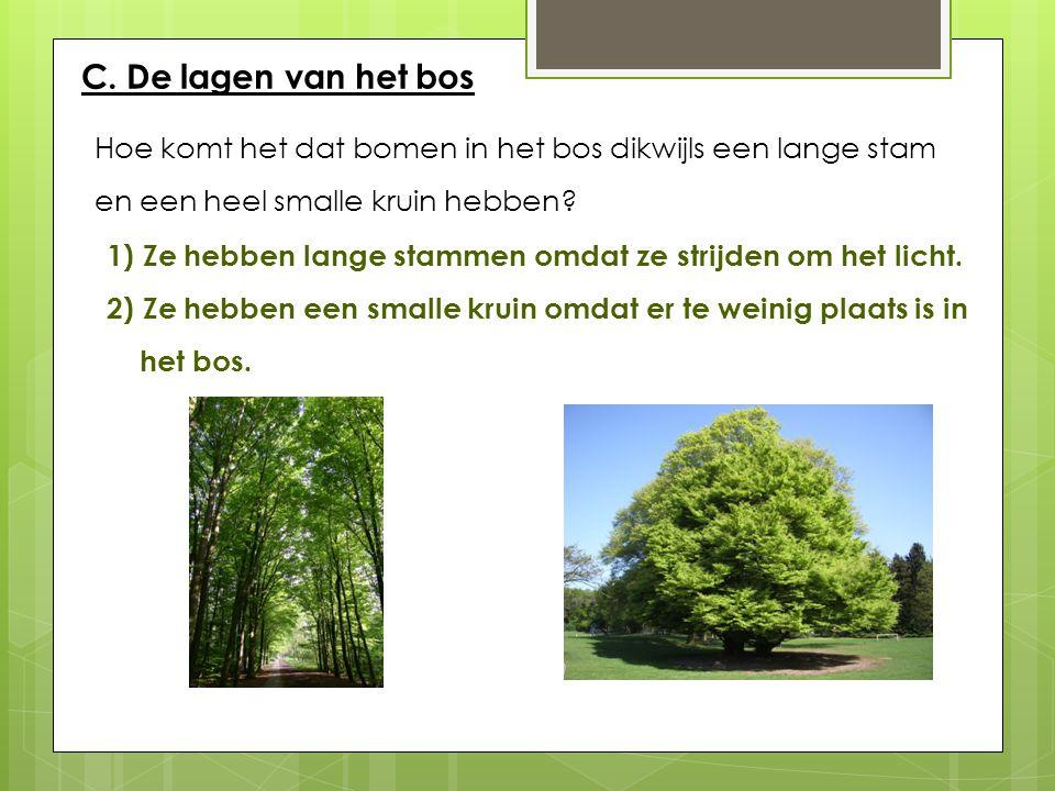 C. De lagen van het bos Hoe komt het dat bomen in het bos dikwijls een lange stam en een heel smalle kruin hebben? bosopen veld 1) Ze hebben lange sta