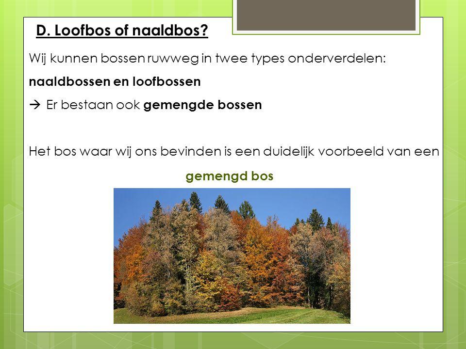 D. Loofbos of naaldbos? Wij kunnen bossen ruwweg in twee types onderverdelen: naaldbossen en loofbossen  Er bestaan ook gemengde bossen Het bos waar