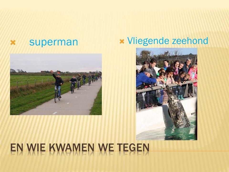  superman  Vliegende zeehond