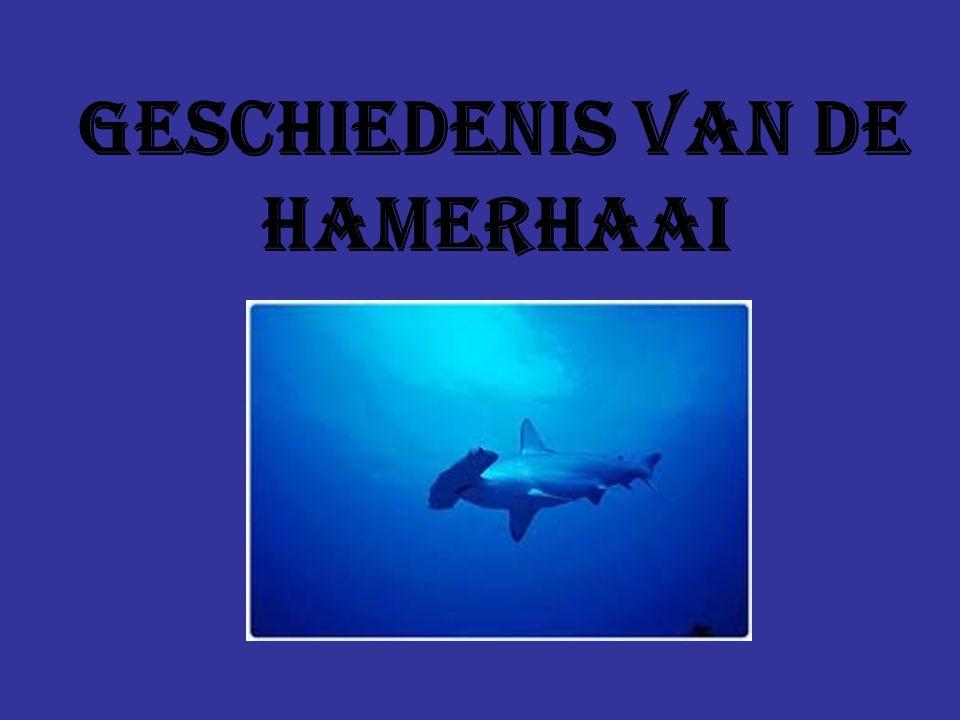 voedsel De meeste haaien eten alleen roggen en andere vissen de meeste aanvallen zijn echter in zijn terietorium als er een mens in zijn buurt komt dan gaat hij zich zelf beschermen dus ik zou het niet wagen om er zo eentje te aaien