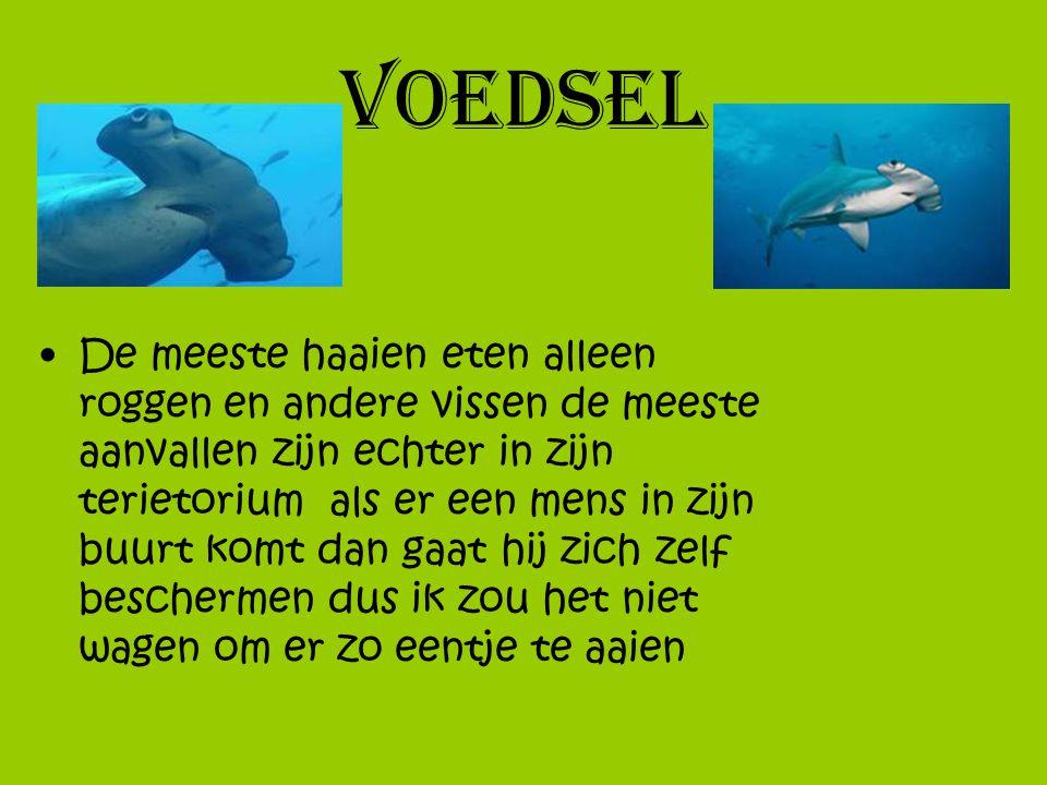voedsel De meeste haaien eten alleen roggen en andere vissen de meeste aanvallen zijn echter in zijn terietorium als er een mens in zijn buurt komt da