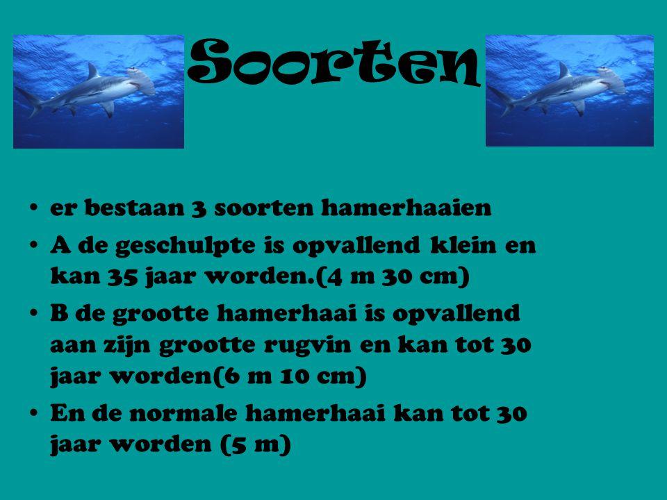 Soorten er bestaan 3 soorten hamerhaaien A de geschulpte is opvallend klein en kan 35 jaar worden.(4 m 30 cm) B de grootte hamerhaai is opvallend aan