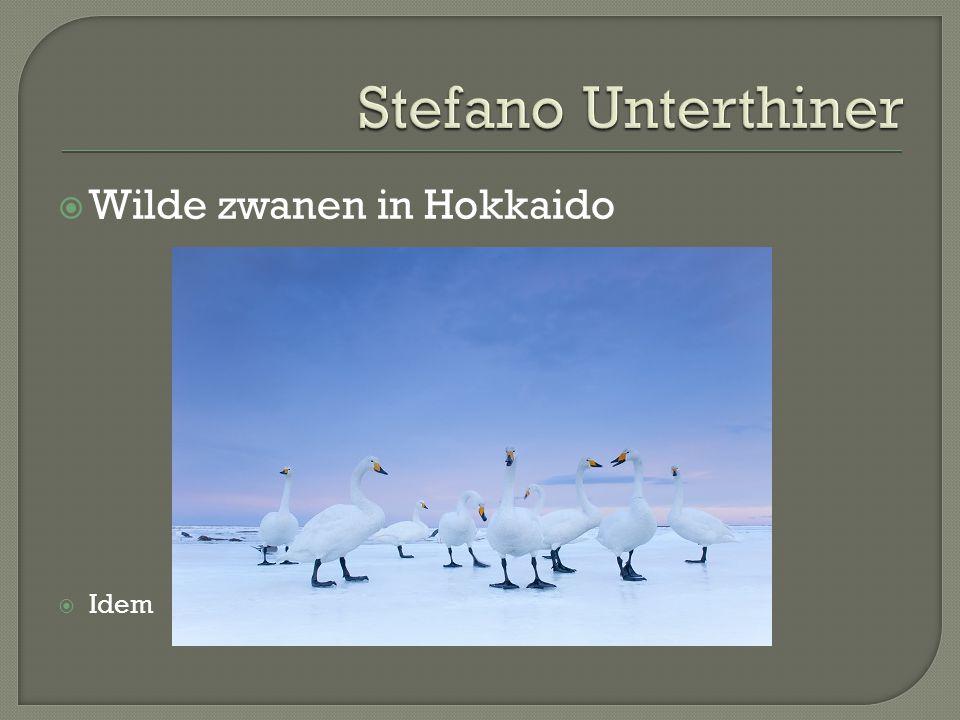  Wilde zwanen in Hokkaido  Idem