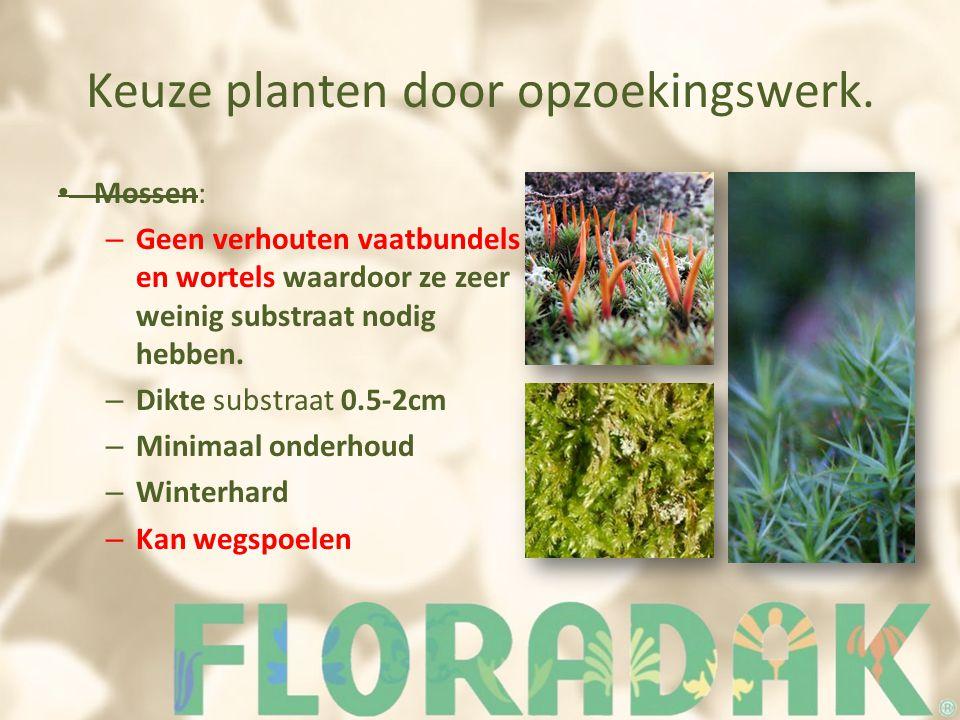 Keuze planten door opzoekingswerk. Mossen: – Geen verhouten vaatbundels en wortels waardoor ze zeer weinig substraat nodig hebben. – Dikte substraat 0