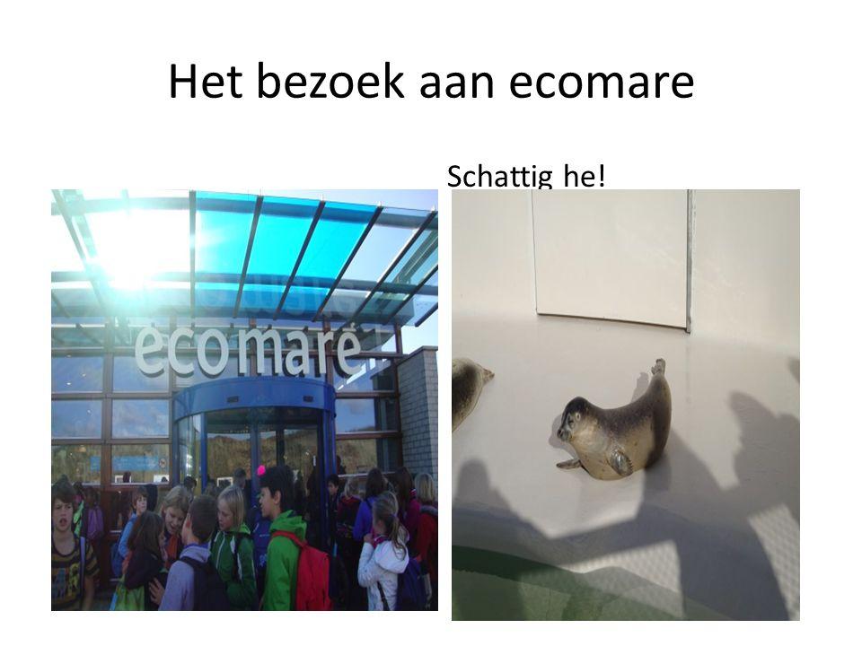 Het bezoek aan ecomare Schattig he!