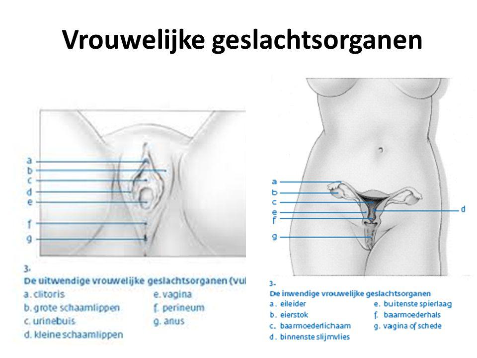 Vrouwelijke geslachtsorganen