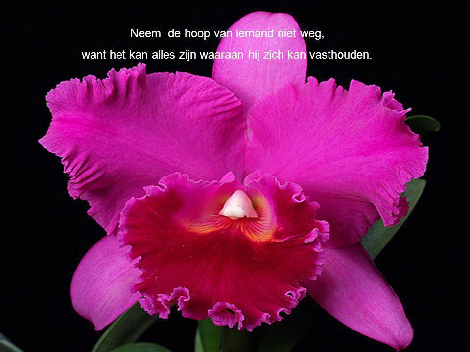Neem de hoop van iemand niet weg, want het kan alles zijn waaraan hij zich kan vasthouden.