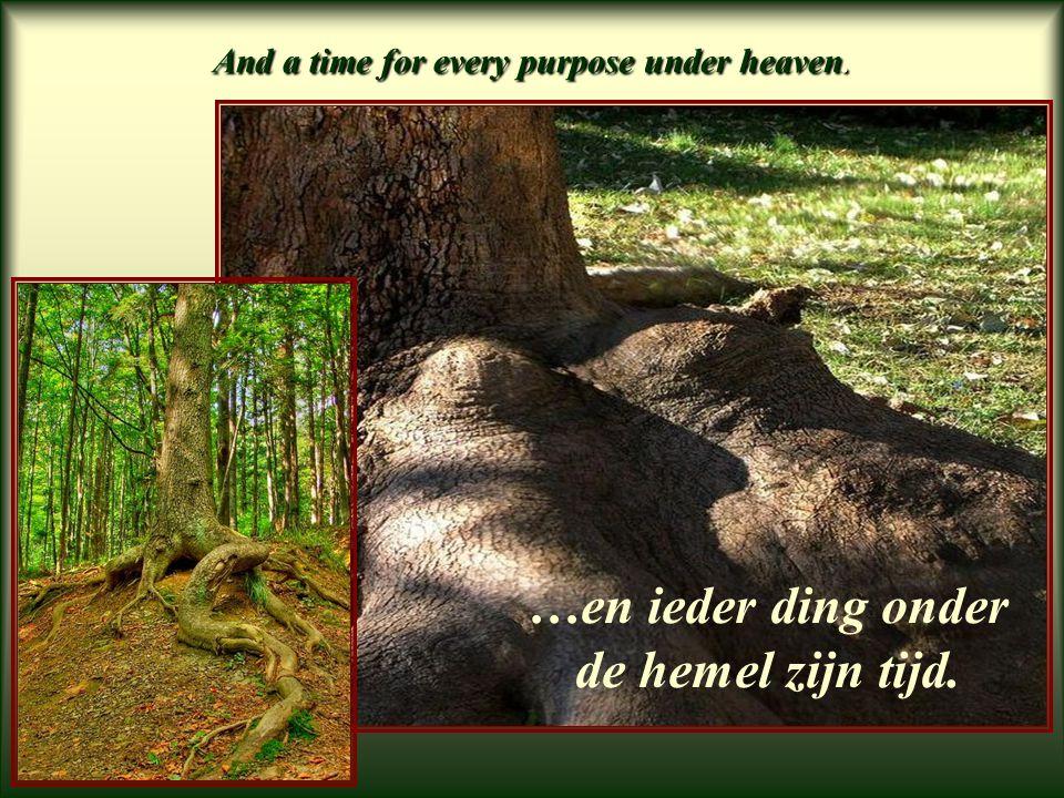 A time to gather stones together. …en een tijd om stenen bijeen te zamelen.