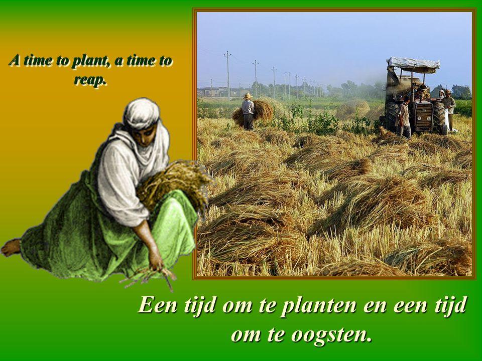 A time to plant, a time to reap. Een tijd om te planten en een tijd om te oogsten.
