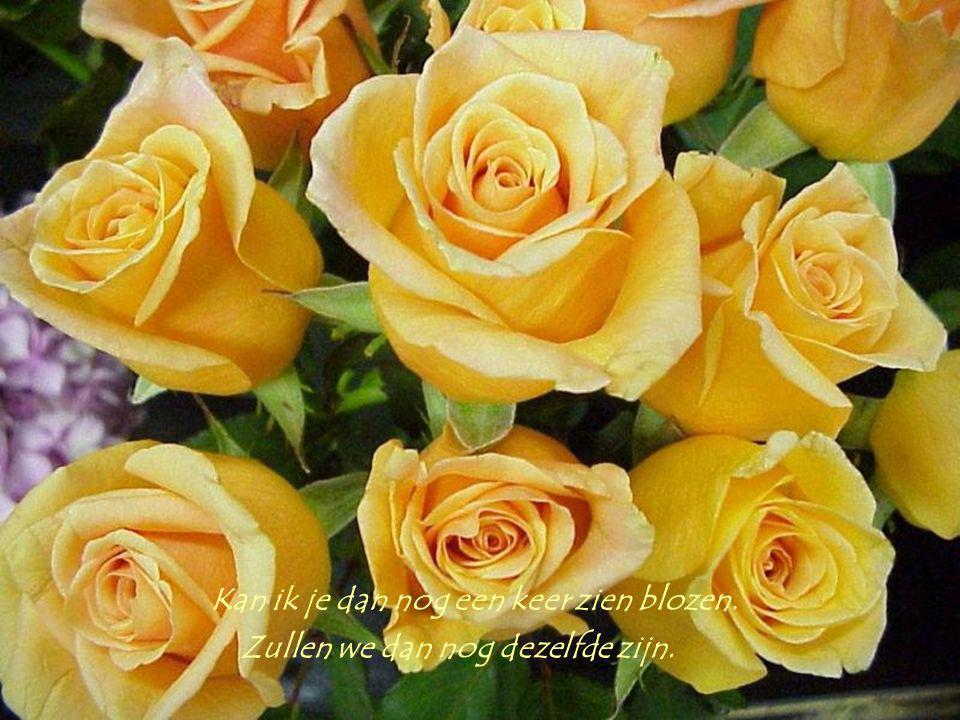 Breng ik je dan nog die gele rozen. Drinken we dan nog onze wijn